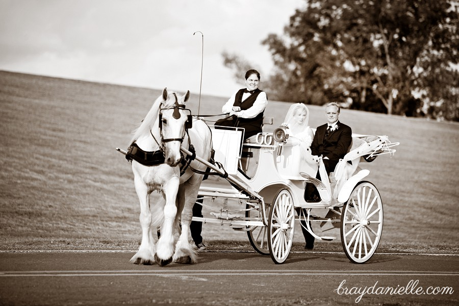 Wedding day horse and carriage